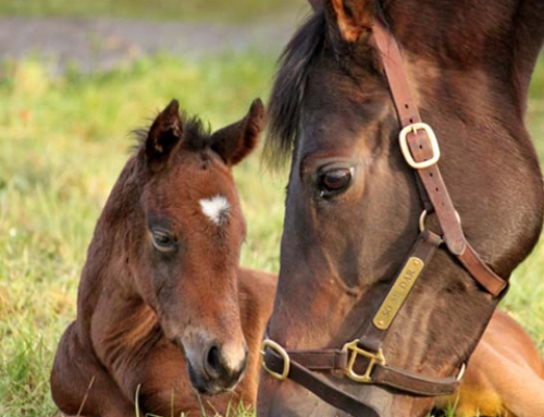 First foal for So Mi Dar