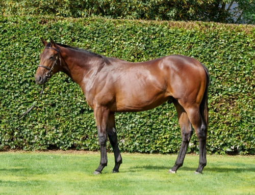 October Yearling Sales Newsletter